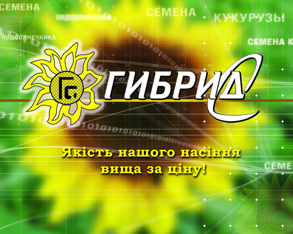 Семена подсолнечника ЗАПОРОЖСКИЙ-28