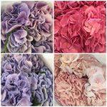Цветы от крупнейших производителей Европы и мира