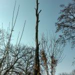 Спилим дерево любой сложности в Одессе