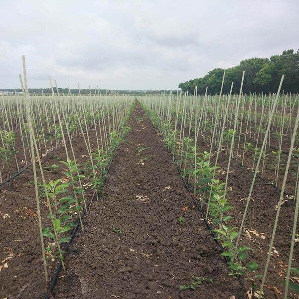 Продам опоры и колышки для растений Polyarm