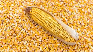 Купим ячмінь, пшеницю